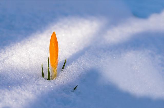 spring-awakening-3132112_640